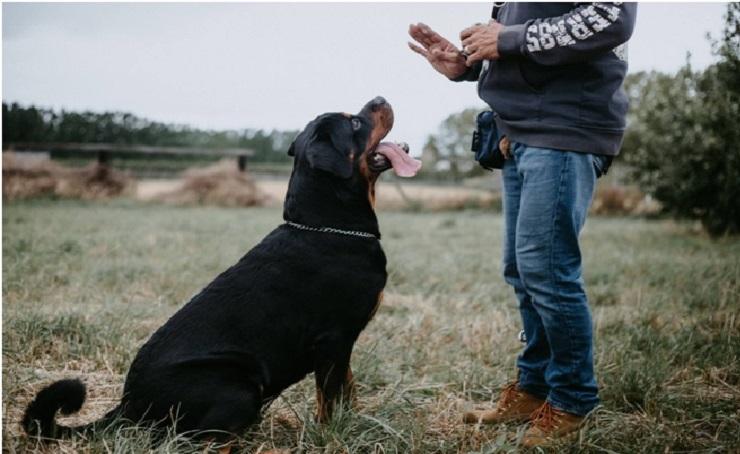 Тренировки для собак
