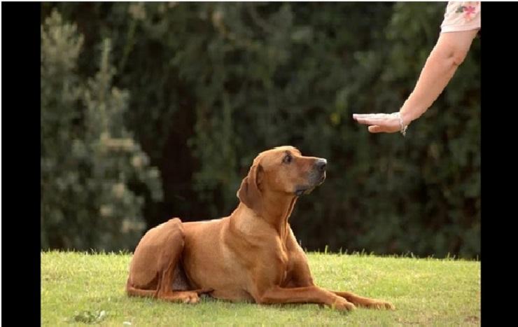 Тренировки для разных видов собак