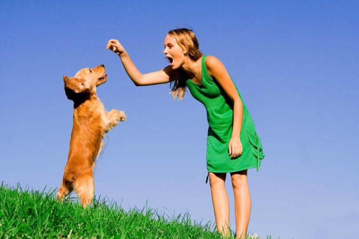 Дрессировка собак разных пород: 15 полезных команд и правил