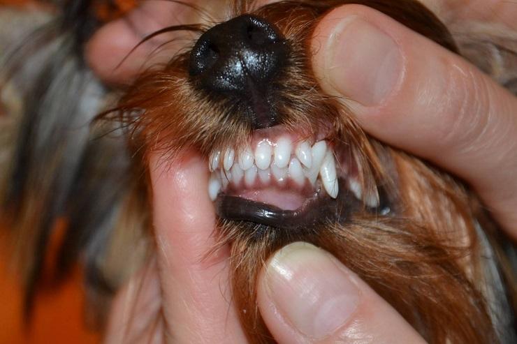 количество зубов не соответствует норме