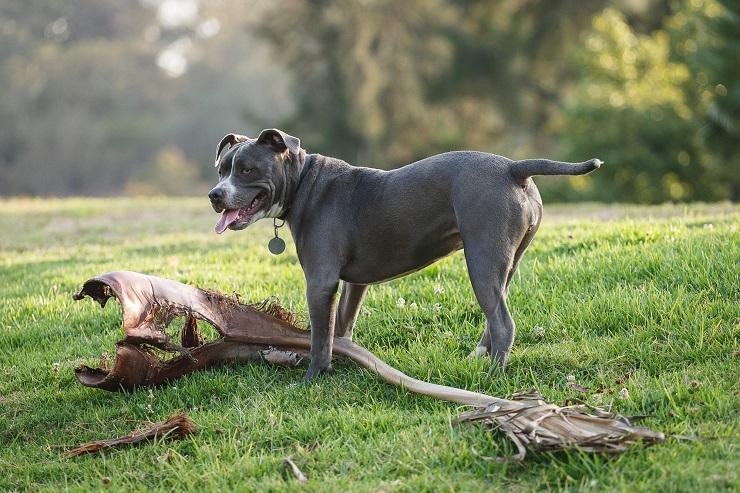 Плюсы короткошерстных породы собак