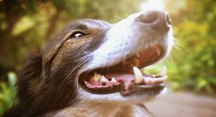 Сколько зубов у собаки