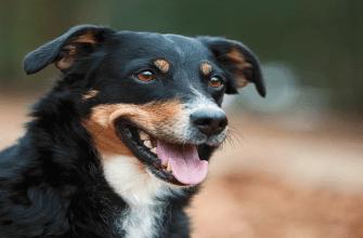 Какие цвета видят собаки - особенности зрения, отличия от человека