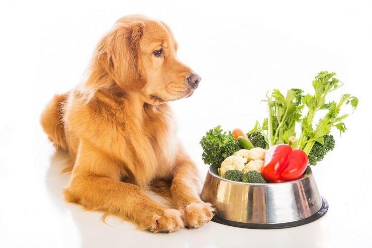 Можно ли собакам овощи и фрукты?